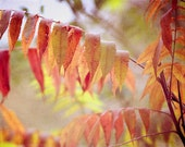 Nature photograph, autumn photograph, color photograph, fine art photography, autumn, red, colorful, fall decor, wall art