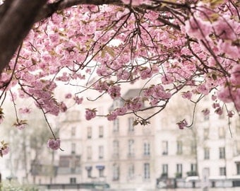 Paris Photography -  Pink Canopy, Cherry Blossoms in Paris at Notre Dame, French Home Decor, Large Wall Art