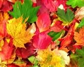 SALE, 200 Real Autumn Leaves, 3D, Potpourri, Wedding Leaf Confetti, Flower Girl Toss, Biodegradable, Thanksgiving Decor, Leaf Confetti