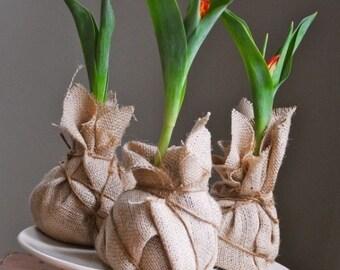 Plantable Wedding Favors   Burlap Wrapped Growing Tulip Bulb Favors, Eco  Friendly, Garden Gift
