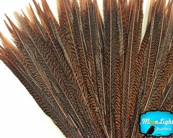 "USA Feathers, 50 Pieces - 12-14"" Natural Golden Pheasant Tail Wholesale Feathers (bulk) : 3618"