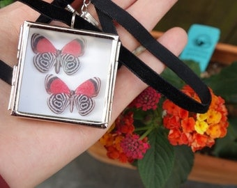 89 butterfly necklace - Silver shadowbox pendant - Miniature Butterfly Collection Display Case - black and red