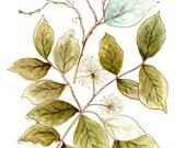 pve botanical number 1