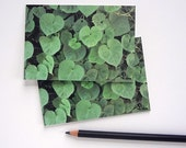 nature art note card set, photograph cards, green hearts, blank card, garden party invitations
