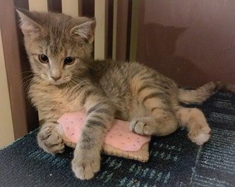 Poptart cat toy - catnip toy - felt poptart toy pet fake food play set kitten - pop tart pop-tart pastry