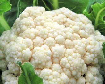 Organic Snowball Cauliflower Seeds