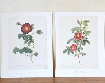 Vintage Botanical Art Print Pink Roses -  No. 4  - Vintage Chic Decor