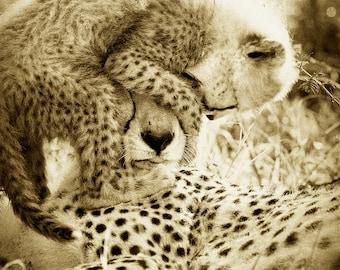 50% OFF SALE, Funny Baby Cheetah With Mom Photo, Sepia Print, Mom and Baby Animal Photograph, Wildlife Photography,  Nursery Art, Safari