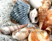 Shells on Beach Photograph - 5x7 Photographic Art Print