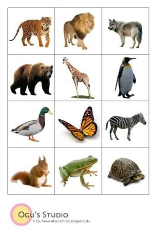 It's just a photo of Lively Printable Animal Flash Cards