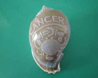 "Sea Shell Zodiac Cancer Carved Bonnet Shell 3.5""  India"