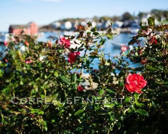 Rockport Sea Roses