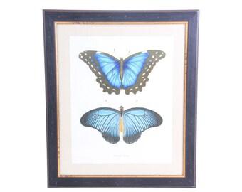 Large Vintage Butterfly Print Framed