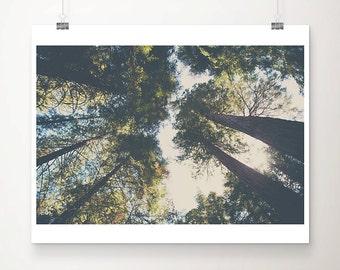 woodland photograph tree photograph giant sequoia photograph california photograph green leaf photograph tree print giant sequoia print