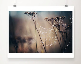 spiders web photograph rain photograph winter photograph dark art dark photography spiders web print insect photograph