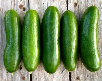 SALE Persian Cucumber Green Finger Excellent Quality & Flavor Extra Crisp Juicy Middle Eastern Type Organically Grown Rare Seed