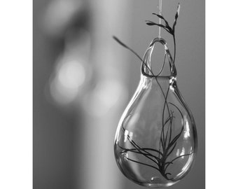 Hanging Wall Planters / Hand Blown Glass Art / Glass Flower Vase / Glass Art / Clear Transparent Glass