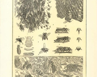 "Digital Download ""Bees"" Illustration (c.1900s) - Instant Download of Bees, Hornets, Beehives, Illustrated Insects"