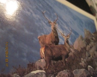"Vintage ""Two Stags"" Post Card..by Stirling Gallery...unknown age"