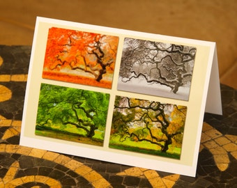 Blank Note Card Seasons Threadeaf Japanese Maple Tree Nature Photography Tree of Life Landscape Photographs Zen Autumn Winter Spring Summer