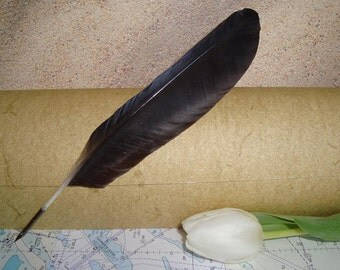 Black Crow Feather Quill Pen for Calligraphy Raven