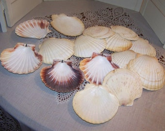 """15 Vintage clam shells, seashell, baking, serving candle holder, cottage beach decor, display, aquarium 5 1/2 x 5 1/2""""...Reduced..WAS 16.49"""