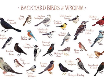 Virginia Backyard Birds Field Guide Art Print / Watercolor Painting / Wall Art / Nature Print / Bird Poster