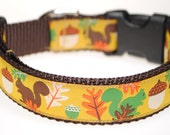 "Squirrels and Acorns 1"" Width Adjustable Dog Collar - Also available as a Martingale"