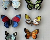 Butterfly Moth Magnets Set of 12 insects Refrigerator Magnets Handmade Educational