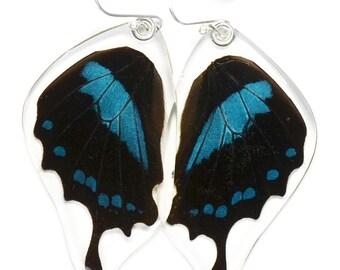 Real Blue Swallowtail Oribazus Butterfly (Papilio oribazus) (bottom/rear wings) earrings
