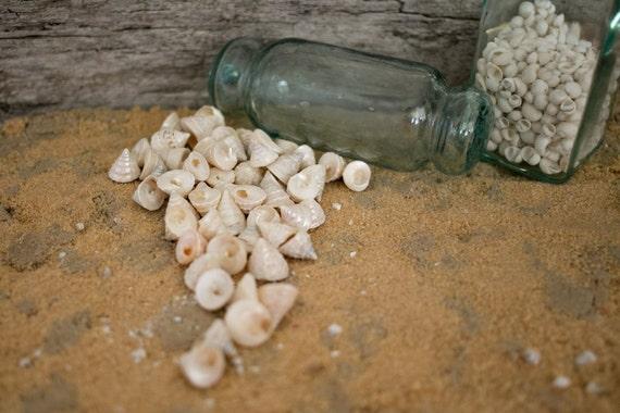 Beach Decor Seashells - Pearl Trochus Shells 25 pcs for Nautical Decor, Beach Weddings or Crafts