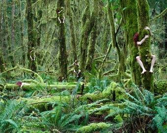 Tree Hugger, Pacific Northwest- 12 x 18 Photography Art Print