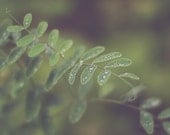 Green Leaves Photography | Natural Brown Green Flowers Nature | Wall Art | Home Decor | Landscape | Country | Fall