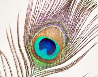 home decor, 5x5 print, color print, peacock feather, purple, wall decor, birds, fine art photography