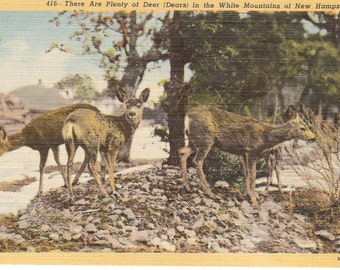 Vintage Linen Postcard....There Are Plenty of Deer (Dears) in the White Mountains of New Hampshire...Unused...no. 2688