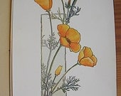1905 Wildflowers of California Folio by Elisabeth Hallowell Saunders