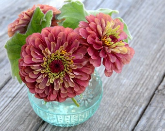 Queen Red Lime Zinnia, Heirloom Zinnia elegans, Great for Cut Flower Gardens, Butterfly Favorite, 25 Seeds From This Year's Crop
