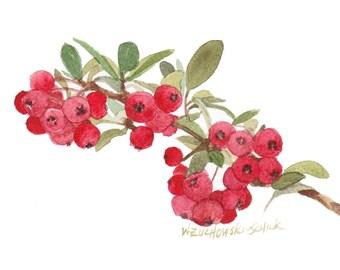 Red Berries Original Watercolor Painting by Wanda Zuchowski-Schick