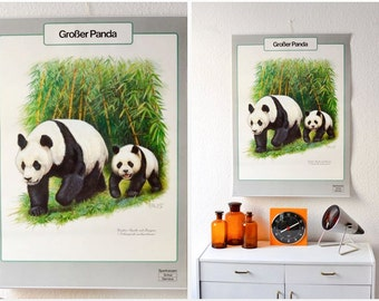 Vintage German panda bear educational poster pull down chart school map zoological biology