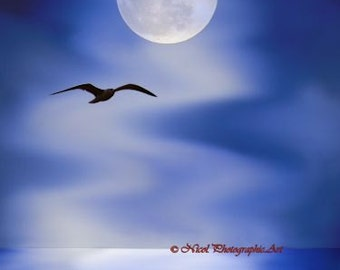 Moonlight Sonata Seagull Flying over Moonlit Water Matted Picture A667 Blue turquois navy white grey