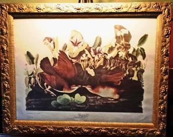 AUDOBON PRINT Key West Doves Wedding Gift LARGE Vintage