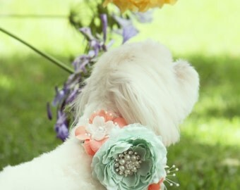 Peach and Mint Floral Dog Collar Pet Spring wedding, Floral dog Collar, Peach and Mint Wedding idea, Dog Lovers