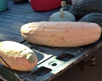Jumbo Pink Banana Heirloom Winter Squash Seeds Non GMO Naturally Grown Open Pollinated