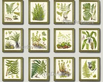 FERN Print SET of 12 Botanical Art Print 8X10 Lindman Antique Green Ferns Roots Chart Forest Summer Plant Nature to Frame Home Decor Garden