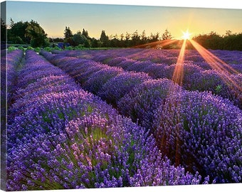 Landscape Photography, Lavender Field Photo, Large Wall Art, Canvas Gallery Wrap, Oversized Print, Pacific Northwest Sequim WA Purple Yellow