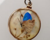 Vintage double-sided milkweed pendant, real moths under glass with solid gold frame