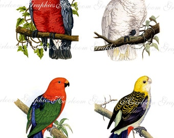Bird Download Vintage Bird Collage Digital Download