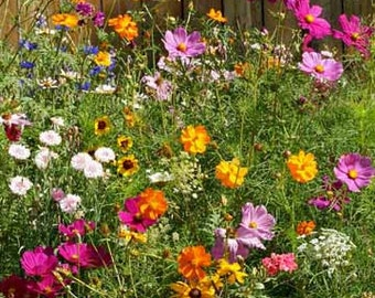 Wildflower Seeds, Cut Flower Wildflower Mix, Cover a Large Area, Attracts Butterflies, Annual and Perennial Mix, 100 Seeds