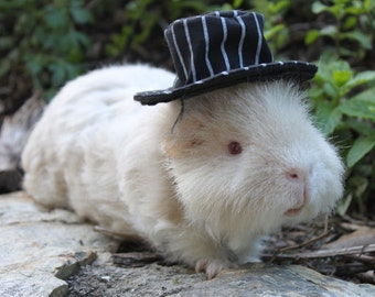 Striped top hat for your  guinea pig or small pet. wedding attire