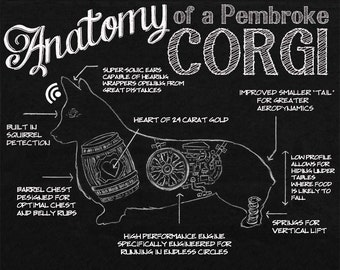 Anatomy of a Pembroke Corgi